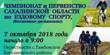 Шустрые лапы - 2018