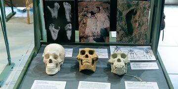 17 черепов и зуб, или изменение человека во времени