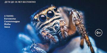 Тропические пауки