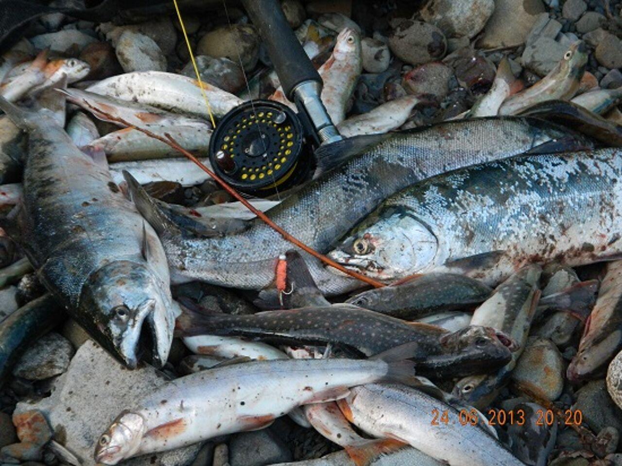 потом, фото крупных уловов симы на сахалине заправляют
