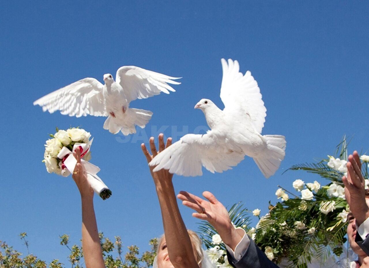 Хорошего, картинка на свадьбу голуби