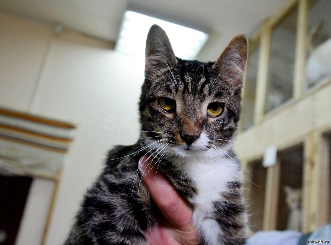 необычные коты мира фото и описание нас для