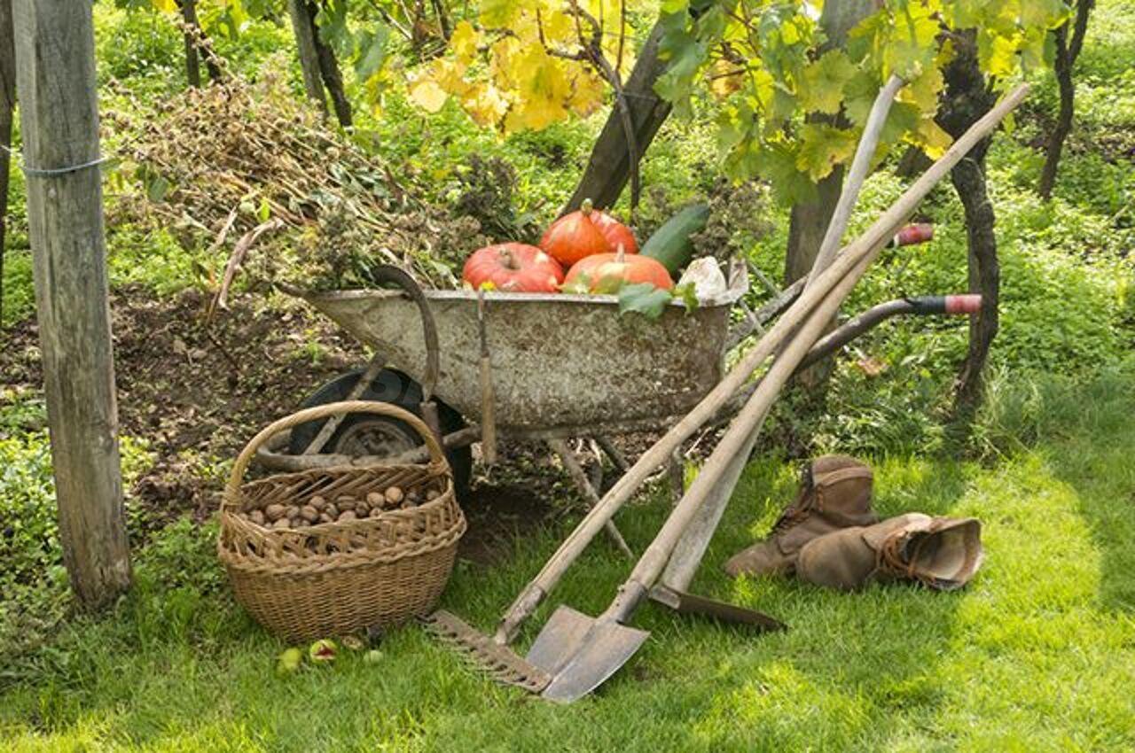 Картинки огород сбор урожая