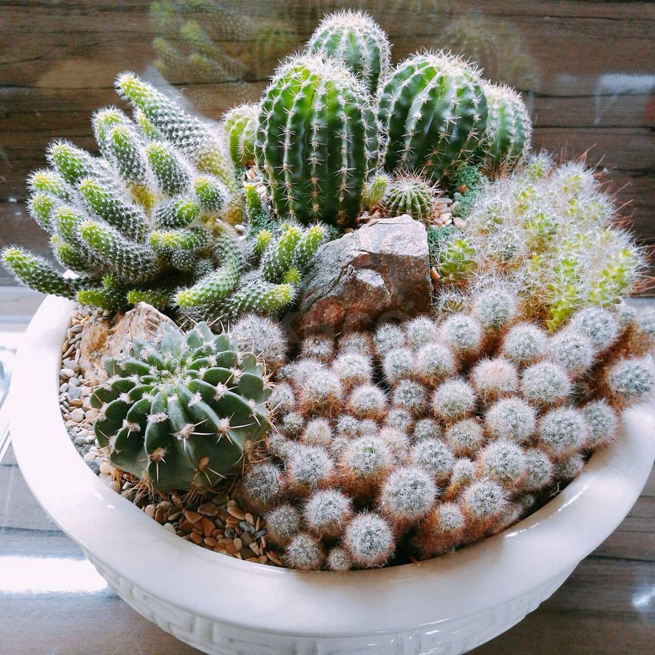 Цветов оптом, букет из кактусов в коробке