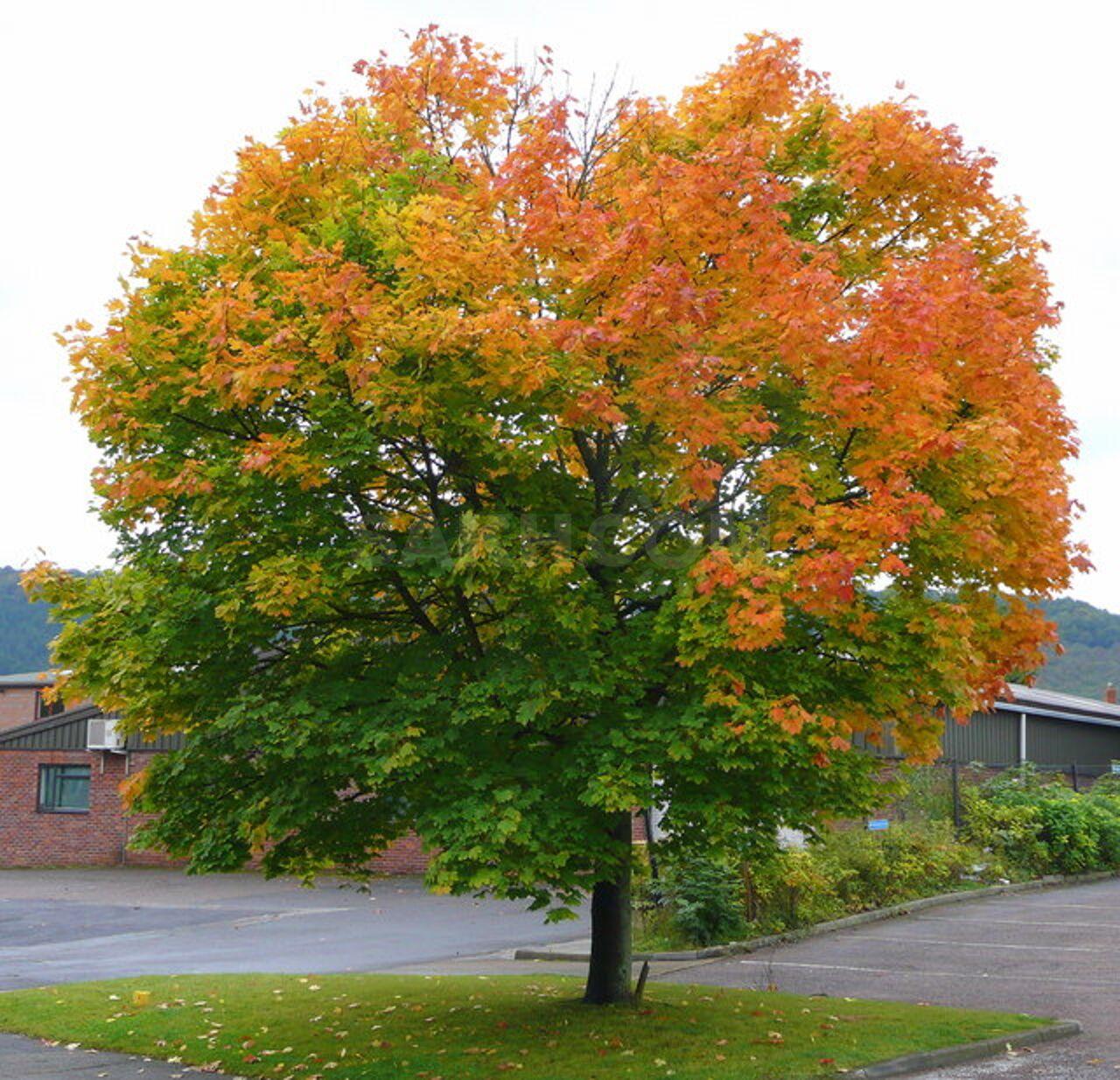 осенние деревья фото и названия статьястроительство теплицы