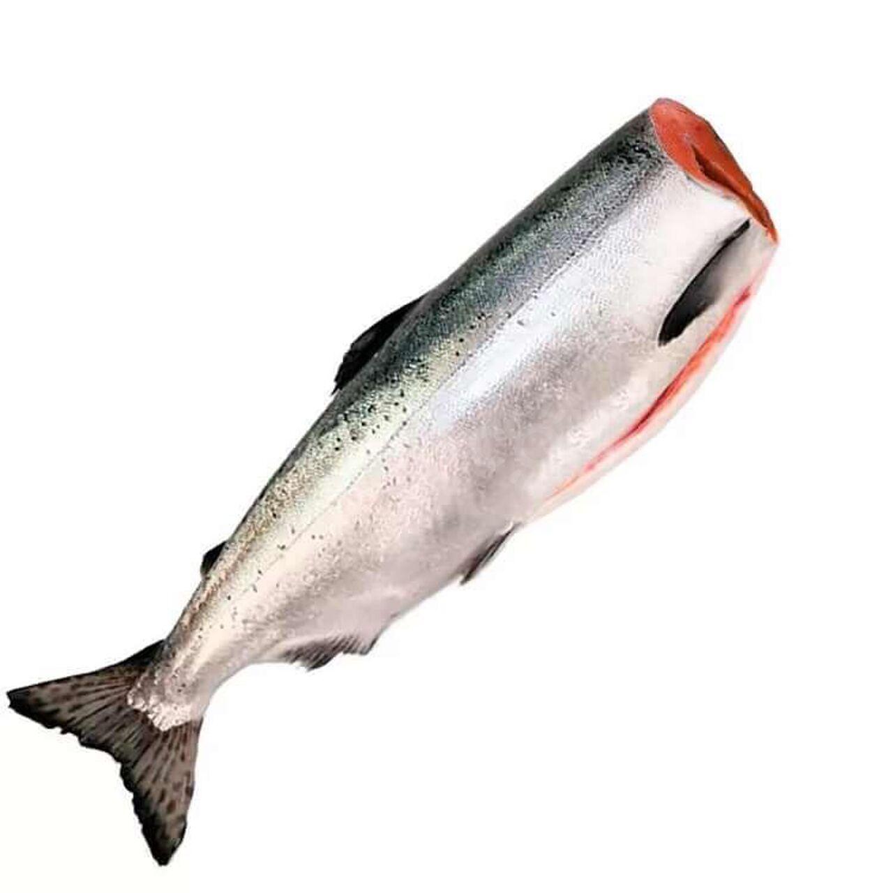 рыба кета фото и описание задача знакомить