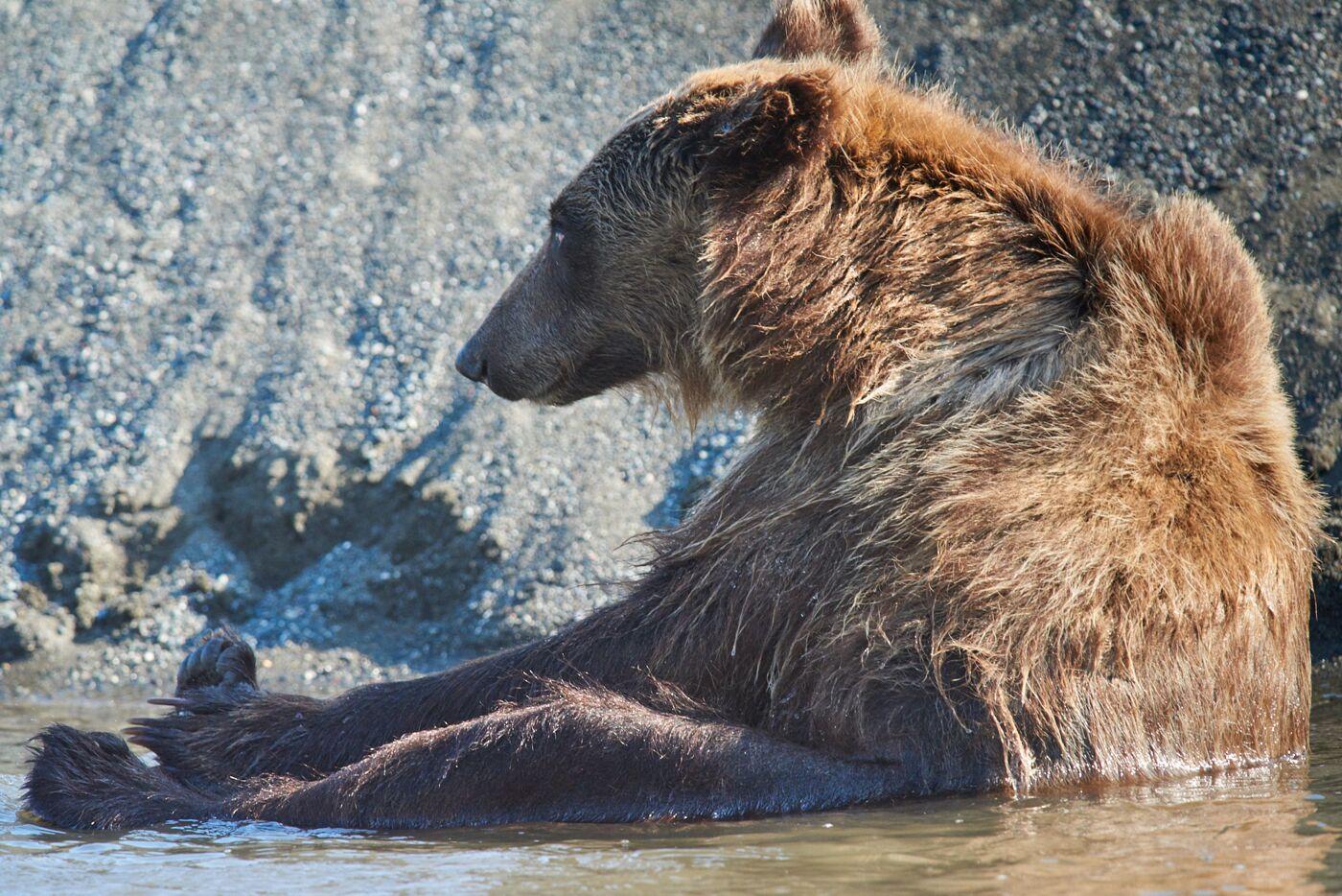 Фото медведя на сахалине в зимнее время