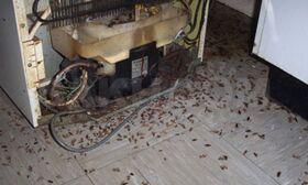 Уничтожение тараканов, клопов, блох, крыс, мышей и т.п.
