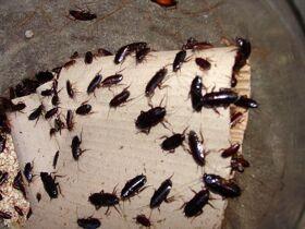 Дезинсекция, вытравливание насекомых и тараканов навсегда.