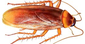 Уничтожение клопов, тараканов, грызунов и насекомых=Дезинсекция